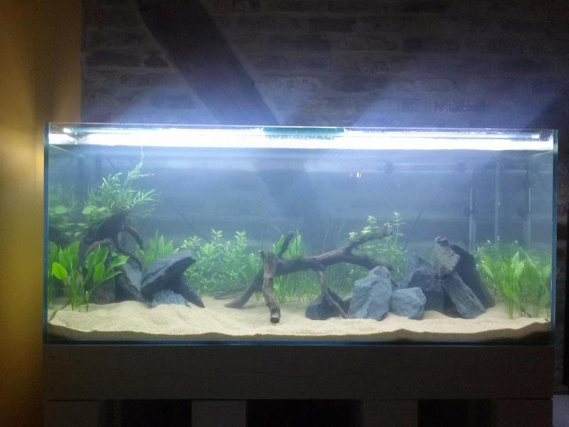 Projet mur végétal et aquarium  - Page 4 31093410