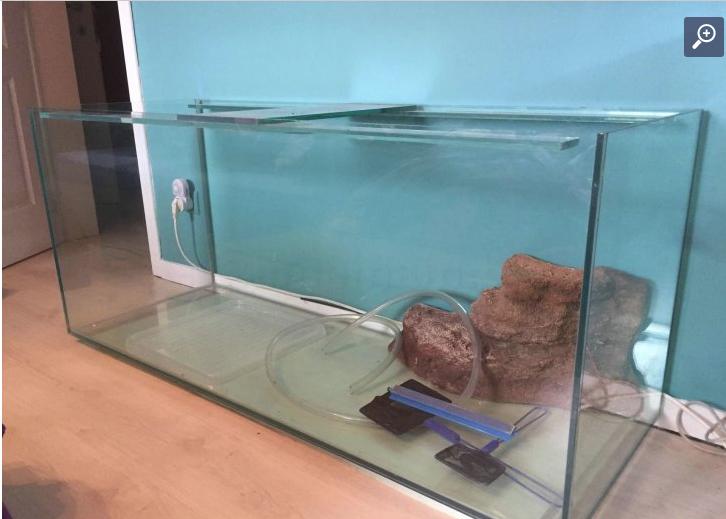 Projet mur végétal et aquarium  Aquari11