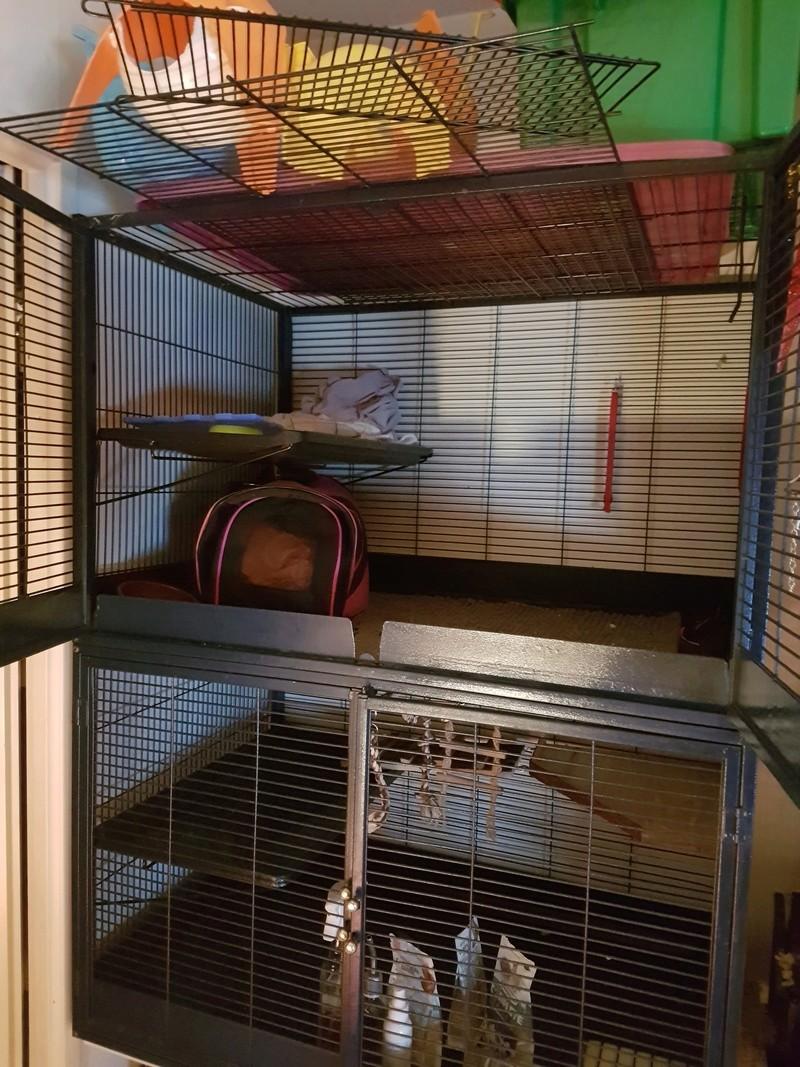 VENDU - Vente cage Savic royal + accessoire  20180111