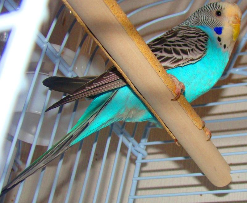 Mes compagnons à plumes Copie_10