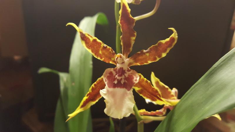 Orchideen-Neuzugang - Seite 41 20180213
