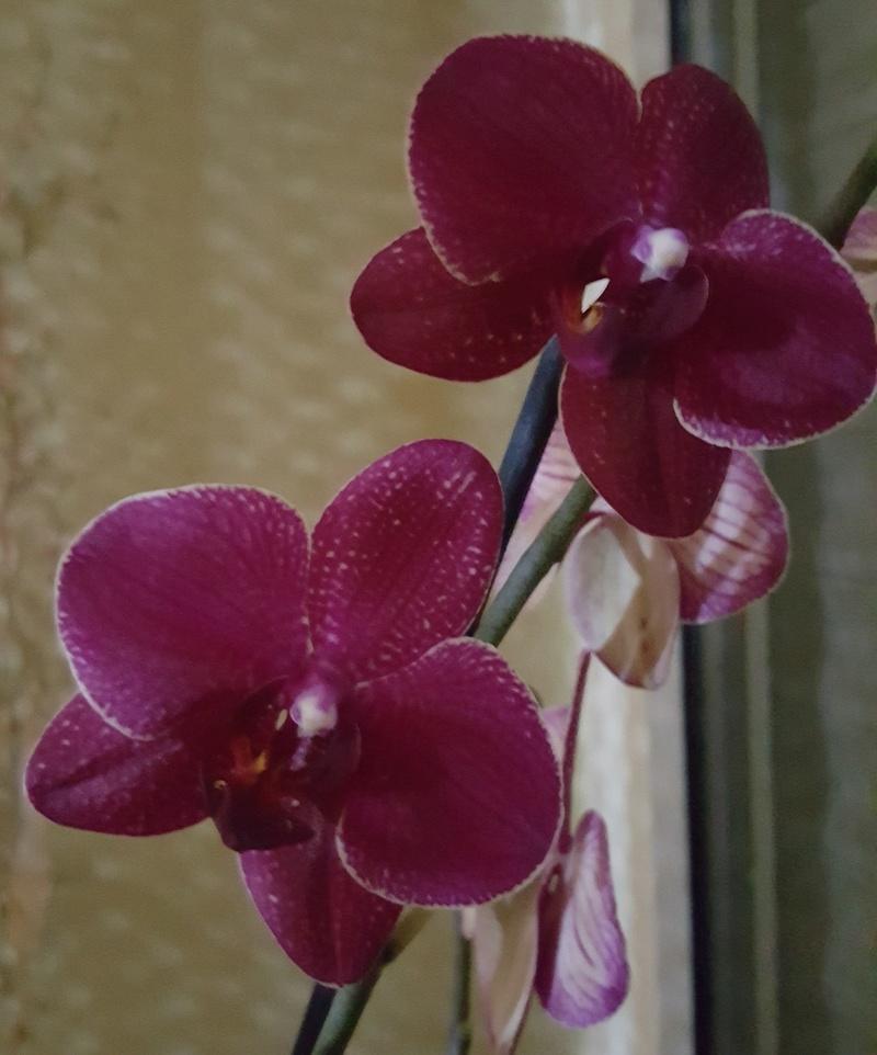 Orchideen-Neuzugang 2 20180216