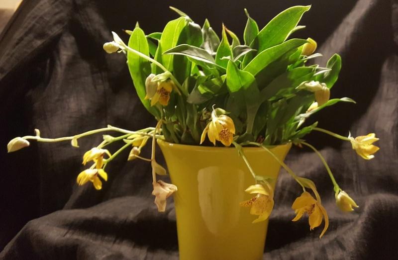 Orchideen-Neuzugang 2 20180218