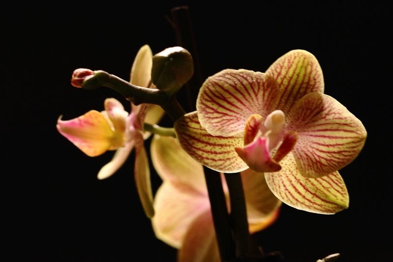 Orchideen-Neuzugang - Seite 40 Img_8719