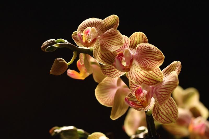 Orchideen-Neuzugang - Seite 40 Img_8720
