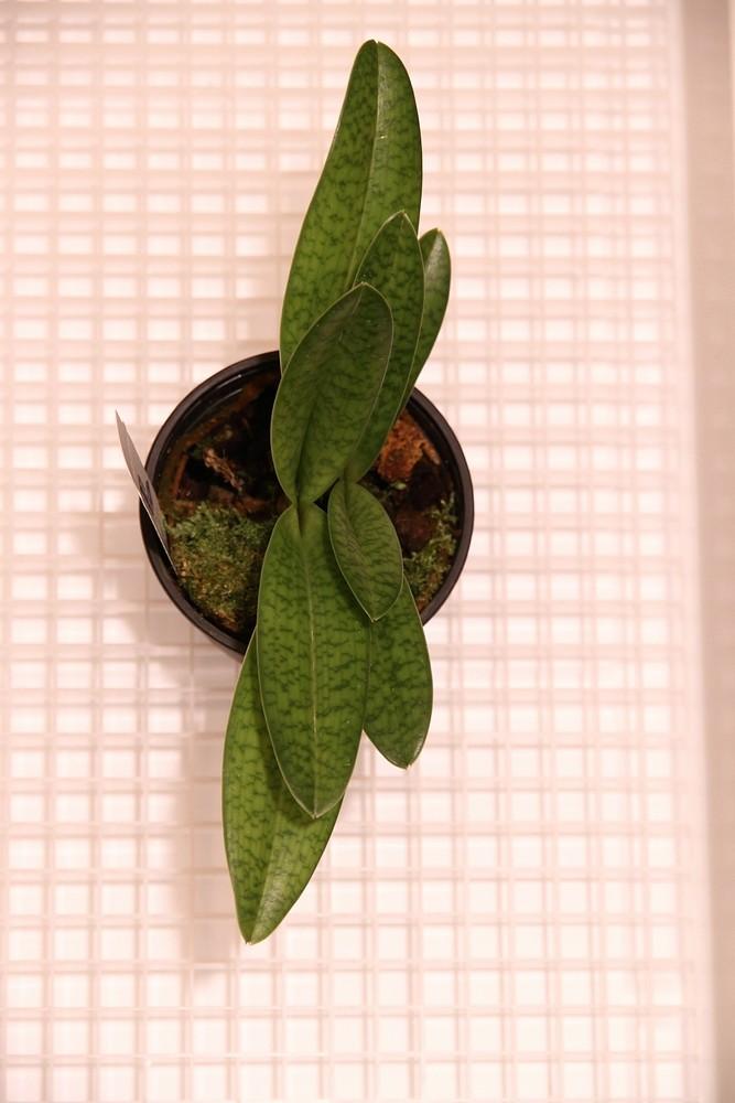 Orchideen-Neuzugang - Seite 41 Img_8810