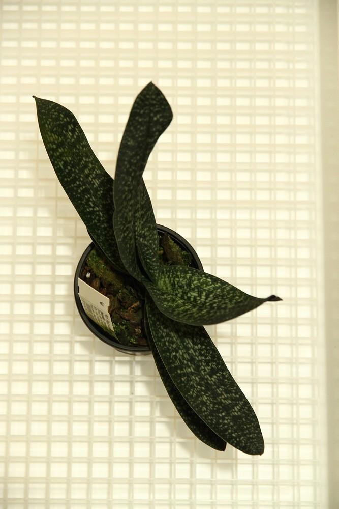 Orchideen-Neuzugang - Seite 41 Img_8813