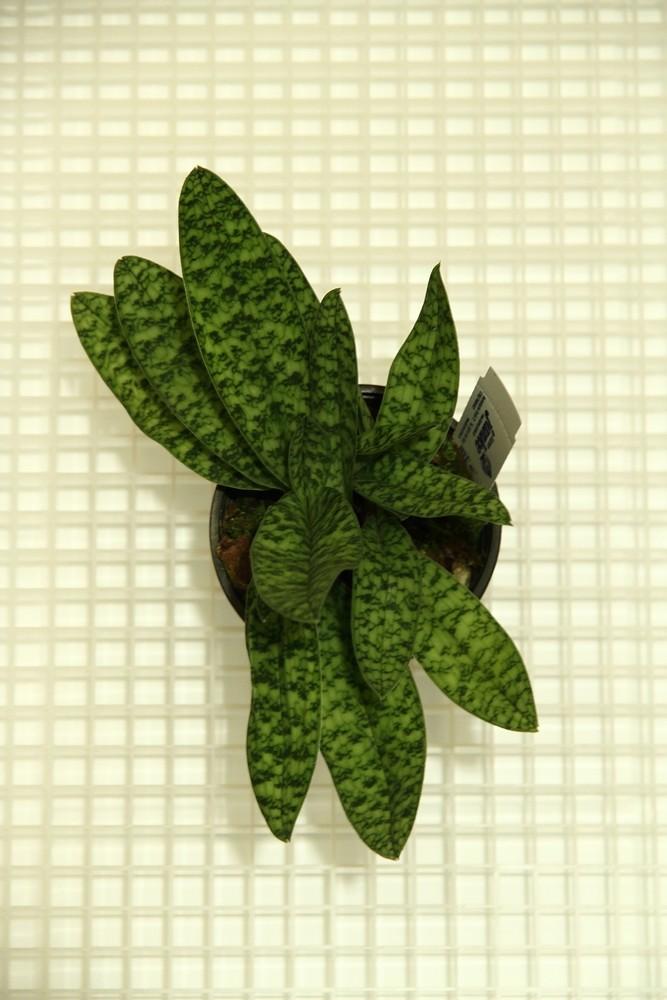 Orchideen-Neuzugang - Seite 41 Img_8814