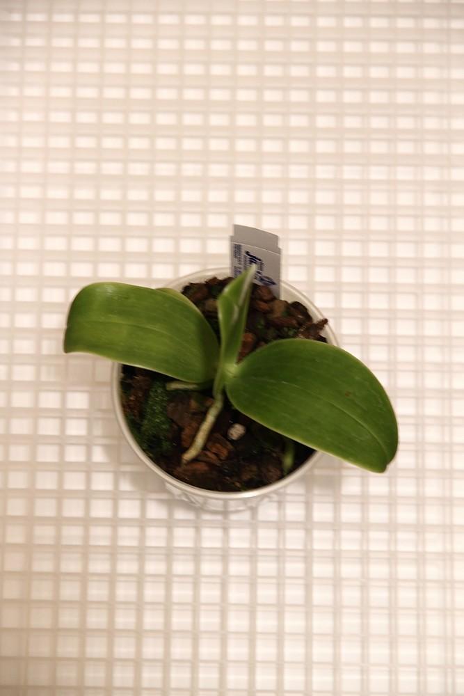 Orchideen-Neuzugang - Seite 41 Img_8815