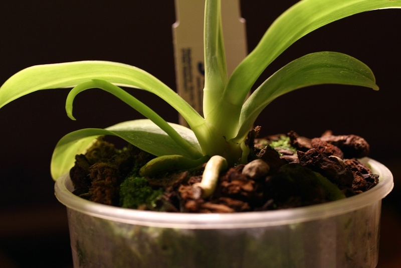Orchideen-Neuzugang - Seite 41 Img_8816