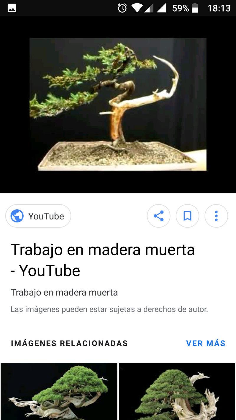 """Diseño Ficus """"Basuradori"""" Screen13"""