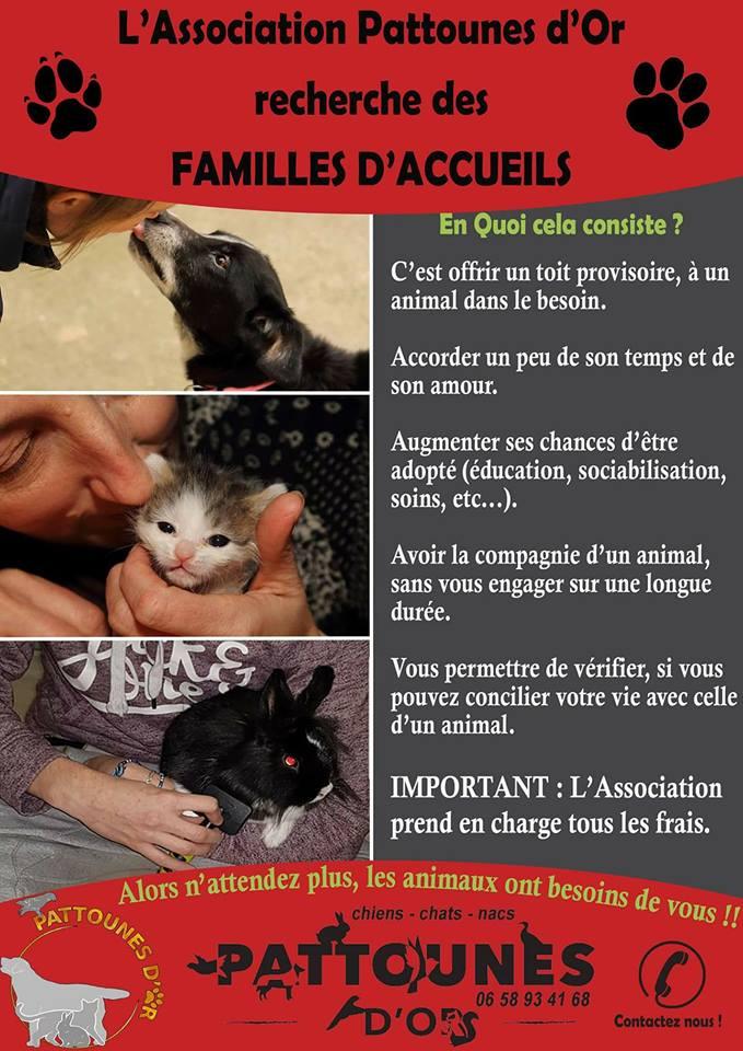RECHERCHE FAMILLE D'ACCUEIL ?  29594610