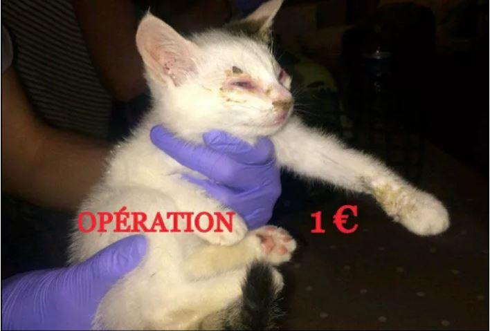 ~ RENOUVELLEMENT OPERATION 1€ ~ Captur10
