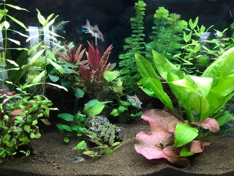Mon aquarium - Page 2 Aquari12