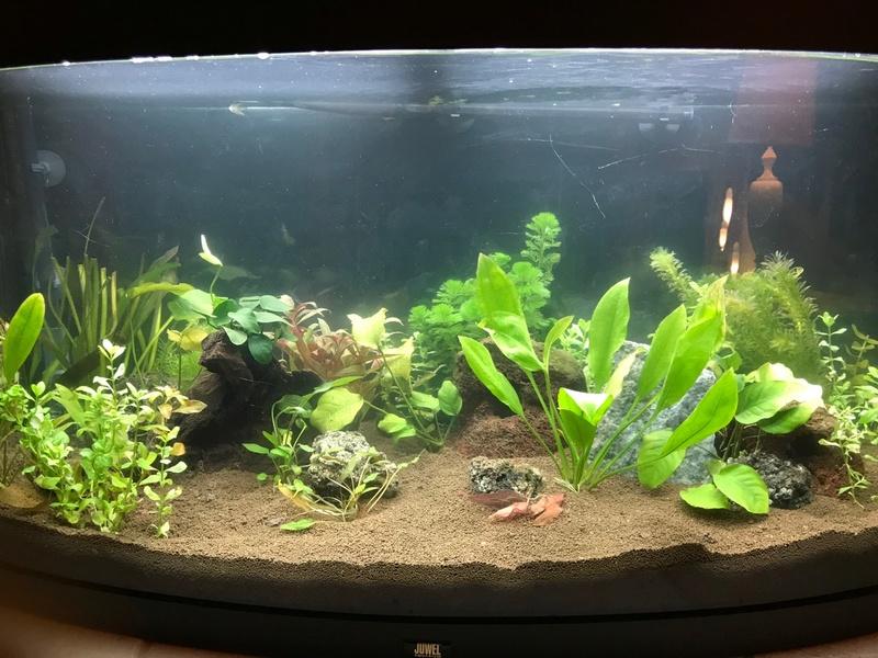 Mon aquarium Img_3911