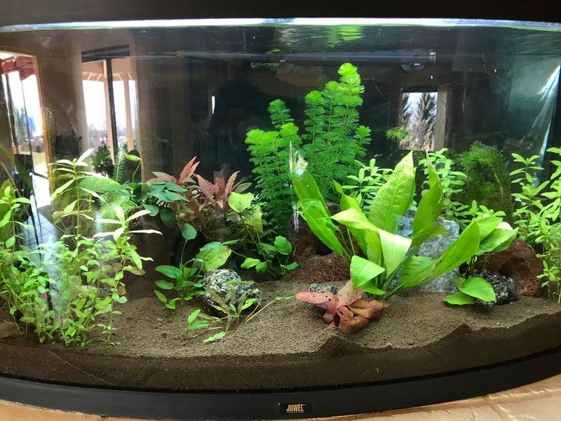 Mon aquarium Img_4010