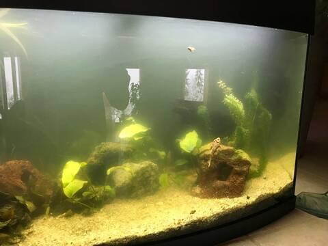 Aquarium datant