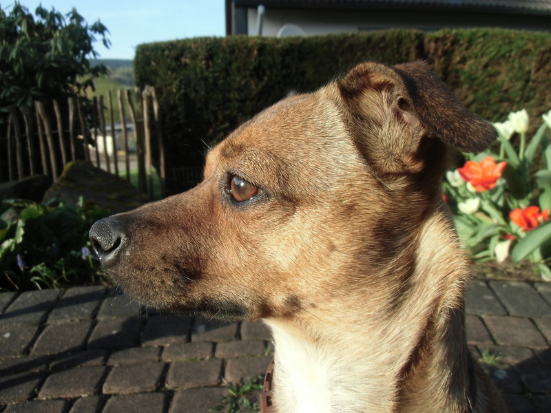 Bildertagebuch - Nacho, herziger kleiner Hundeschnuggel ...VERMITTELT! Dsci0021