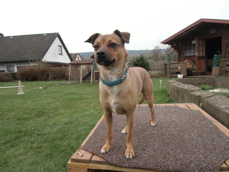 Bildertagebuch - Nacho, herziger kleiner Hundeschnuggel ...VERMITTELT! Dsci0022