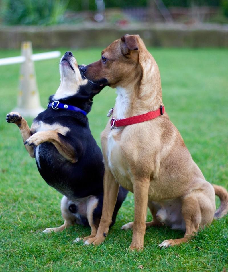 Bildertagebuch - Nacho, herziger kleiner Hundeschnuggel ...VERMITTELT! Img_2114
