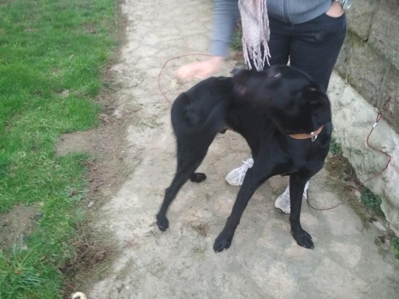[Clos]Visite post adoption (chien) à Domalain pour Looping Img_2013