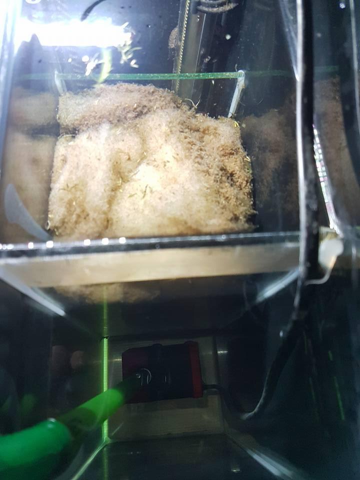 Help que faire ? J'ai une algue dans un de mes bacs! 26993811