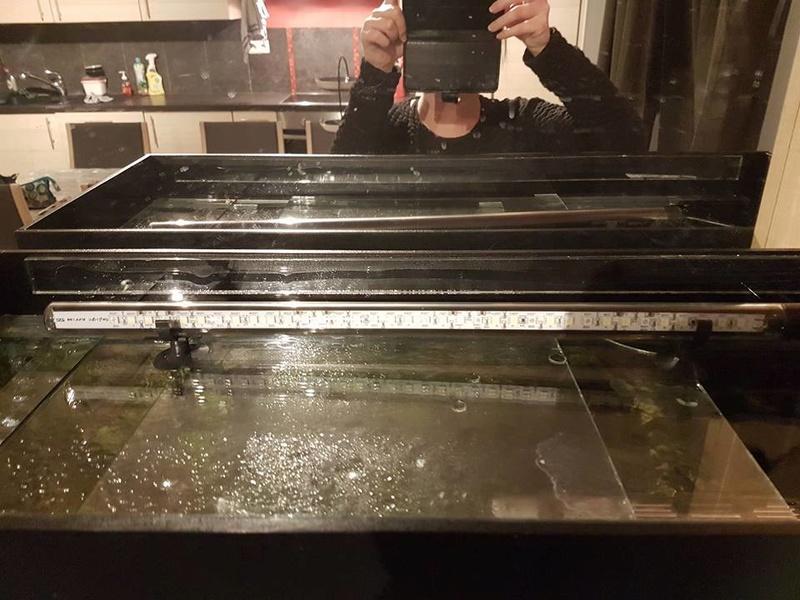 Help que faire ? J'ai une algue dans un de mes bacs! 26994310
