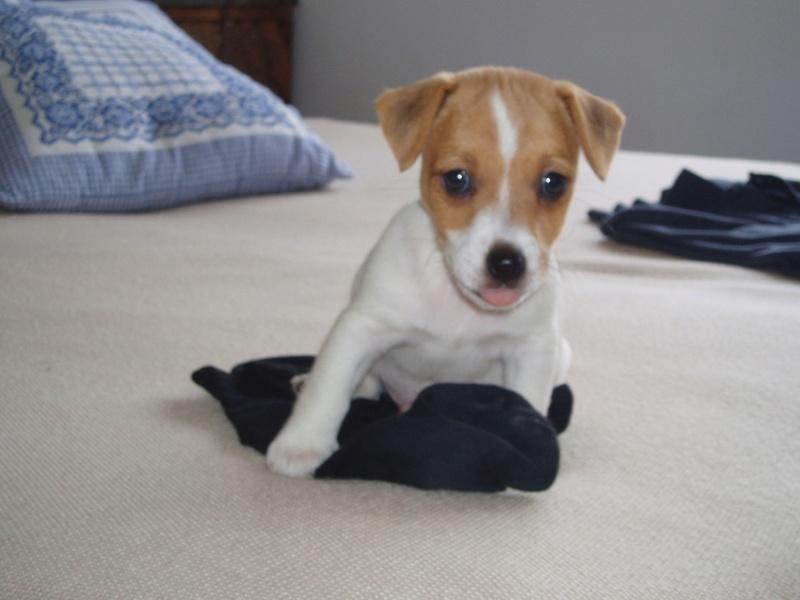 Condividete le foto dei vostri amici animali - Pagina 2 110