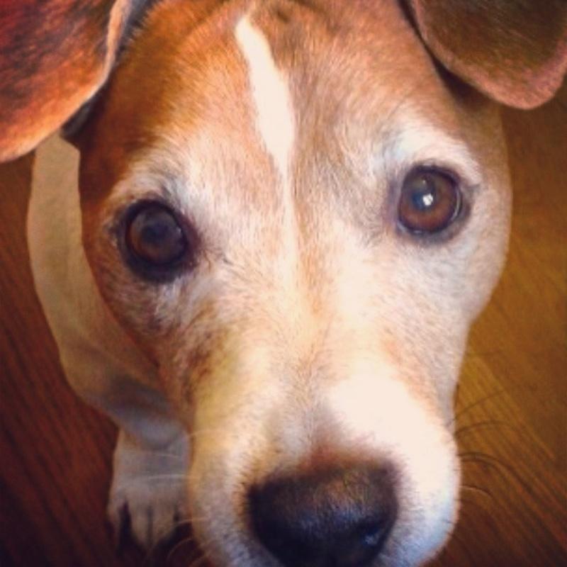 Condividete le foto dei vostri amici animali - Pagina 2 410