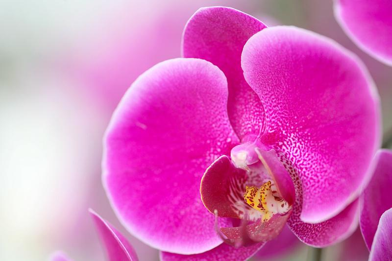 [Jeu] Association d'images - Page 18 Orchid10