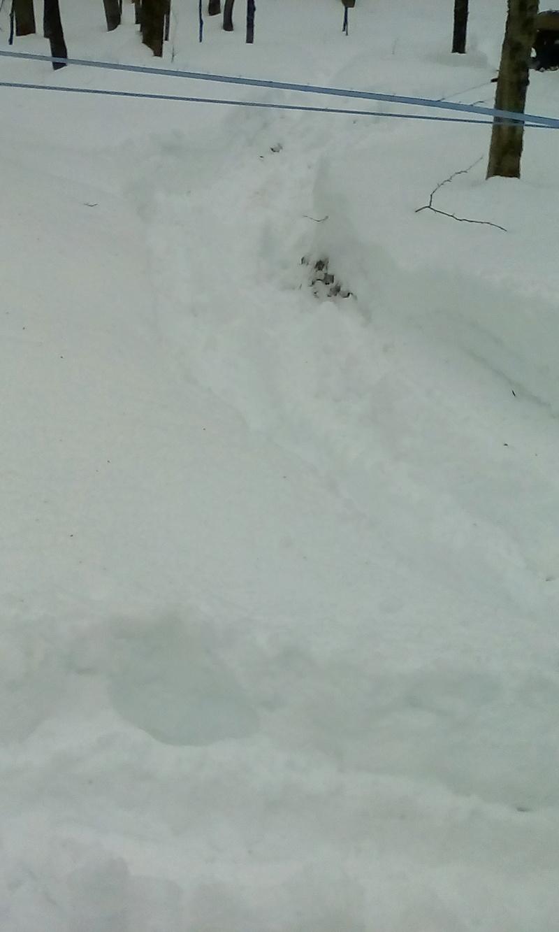 On passe dans la neige 00611