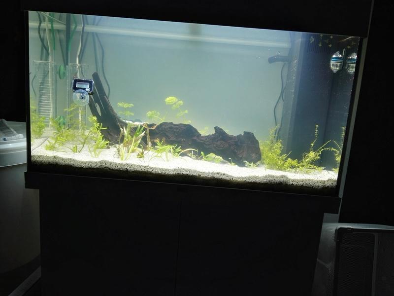 Démarrage d'un aquarium communataire par un débutant motivé Aquari11