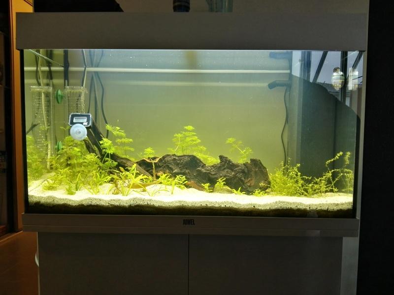 Démarrage d'un aquarium communataire par un débutant motivé Bac10