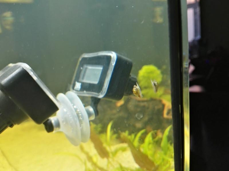 Démarrage d'un aquarium communataire par un débutant motivé Cagoui10