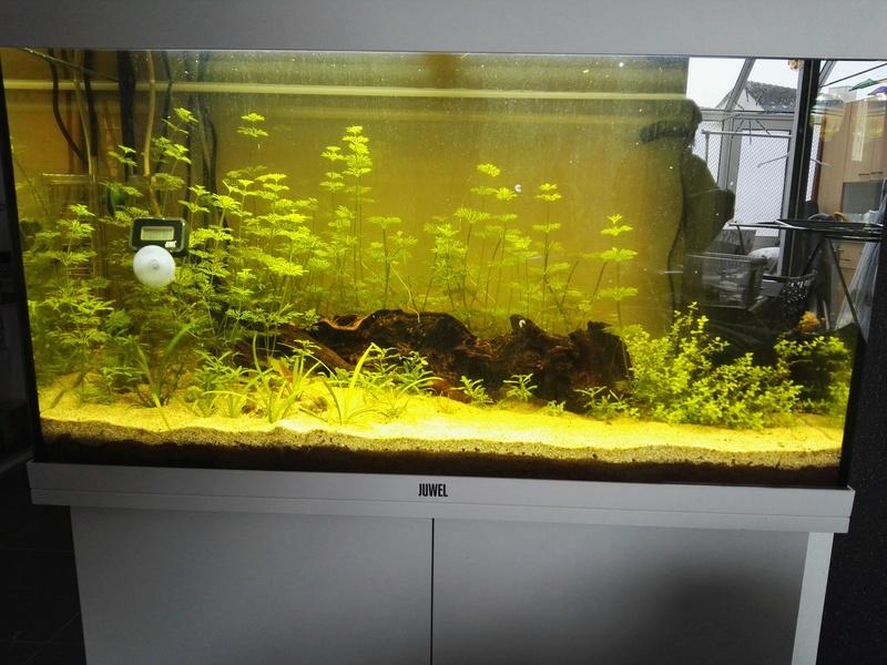 Démarrage d'un aquarium communataire par un débutant motivé Img_2011