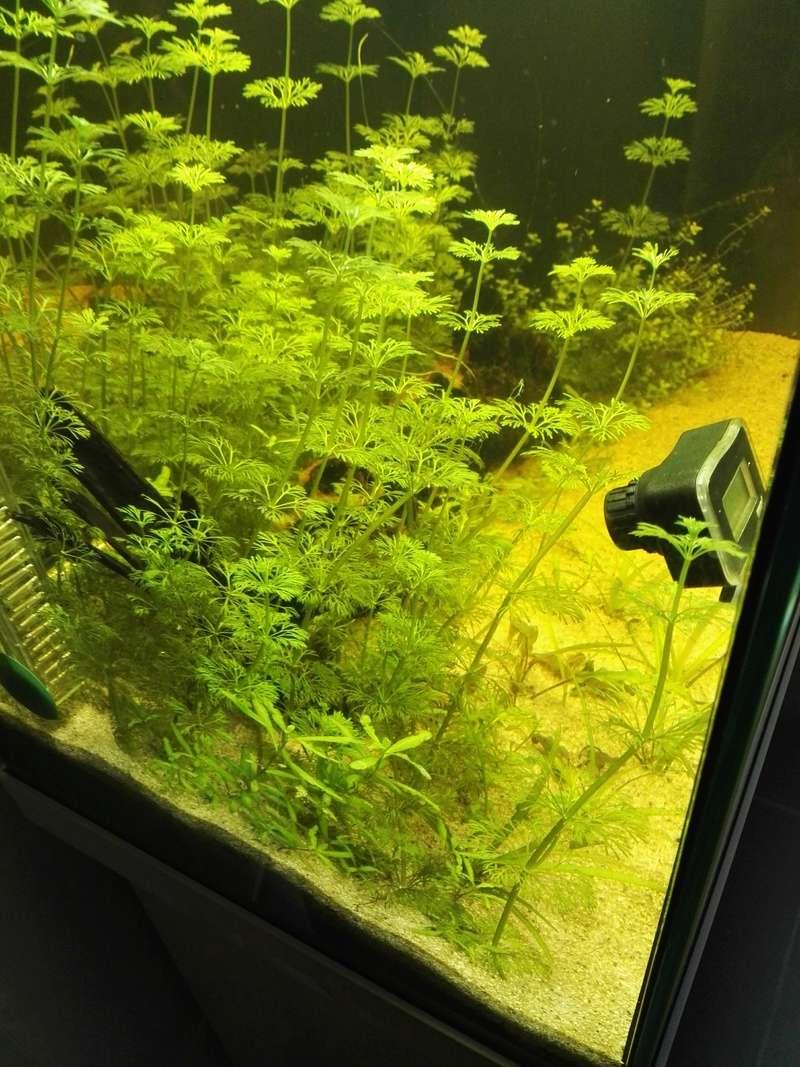 Démarrage d'un aquarium communataire par un débutant motivé Img_2014