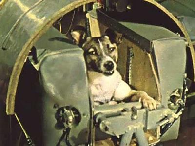 معلومات عن اول حيوان زار الفضاء 1106