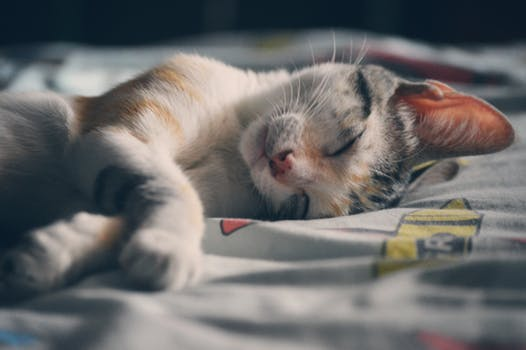 احلى صور للقطط في العالم 2024