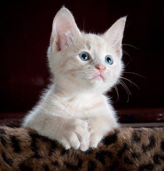 احلى صور للقطط في العالم 2189