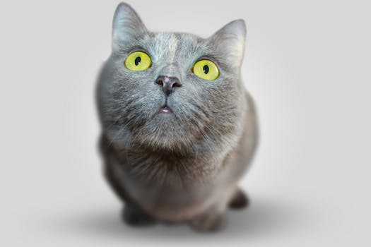 احلى صور للقطط في العالم 2222