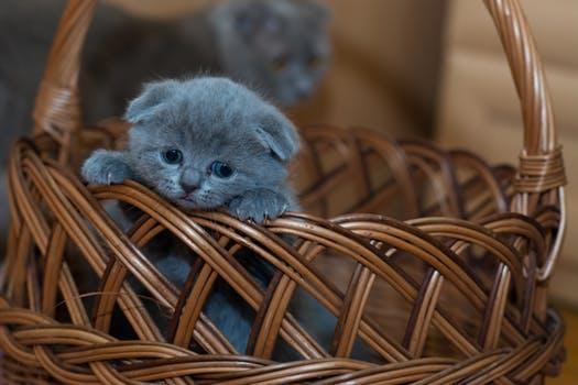 احلى صور للقطط في العالم 2323