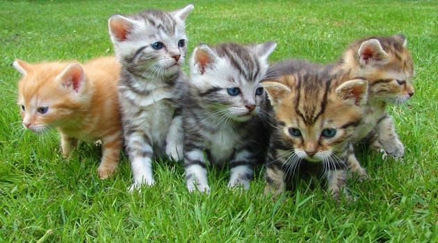 احلى صور للقطط في العالم 2522