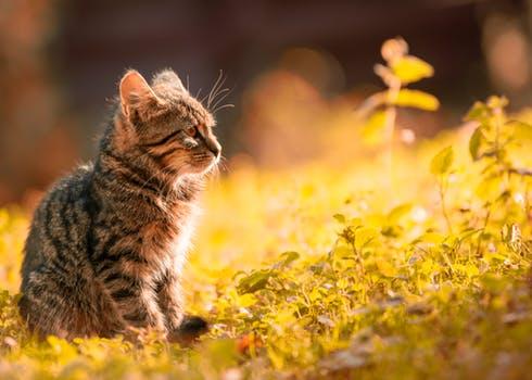 احلى صور للقطط في العالم 2820