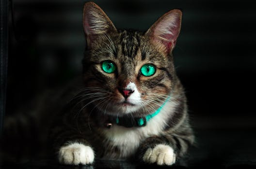احلى صور للقطط في العالم 3171