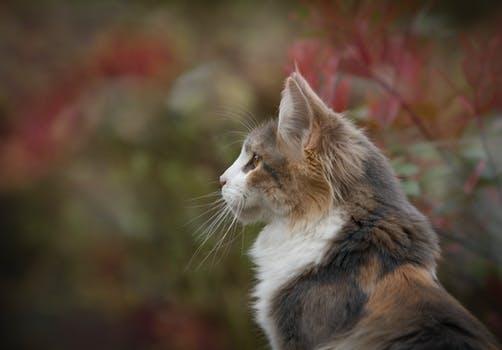 احلى صور للقطط في العالم 3172