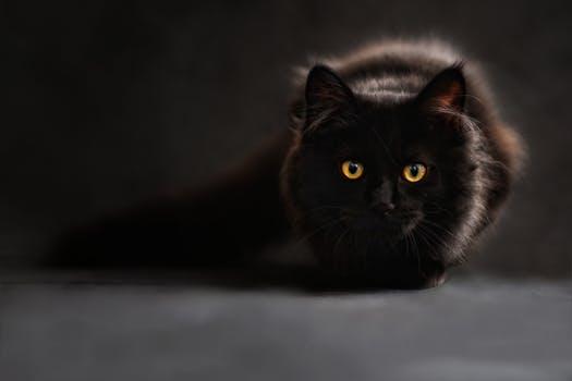 احلى صور للقطط في العالم 3419