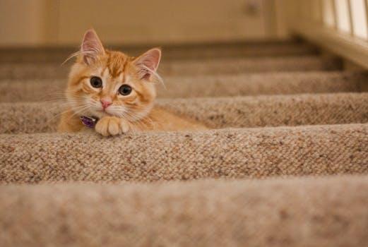 احلى صور للقطط في العالم 3519