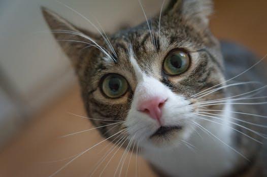 احلى صور للقطط في العالم 3619