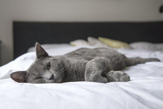 احلى صور للقطط في العالم 3719