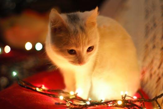 احلى صور للقطط في العالم 3819